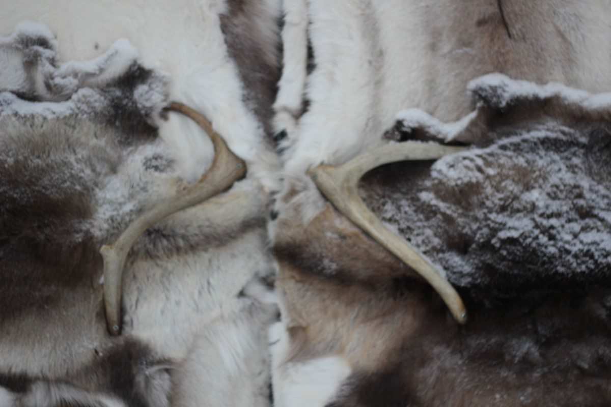 Close up of the reindeer doors of the Ice Hotel